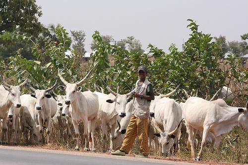 Fulani-grazing
