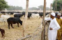 Buhari in Farm