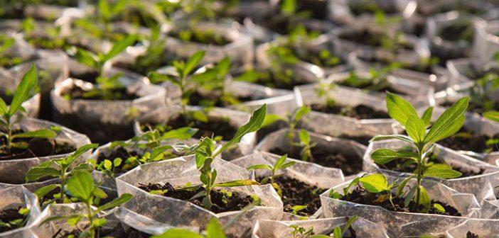 Tree-Planting-by-EU-in-Katsina