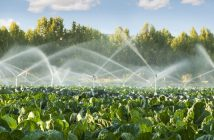 Dry season Farming